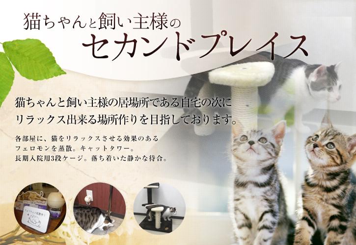 猫ちゃんと飼い主様のセカンドプレイス